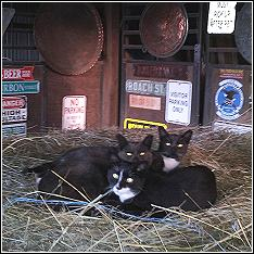 working barn cats